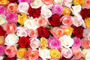Как начать цветочный бизнес с нуля?