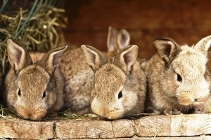 Кролиководство как малый бизнес