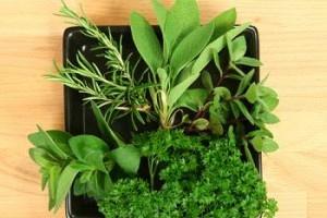 Как выращивать зелень на продажу?