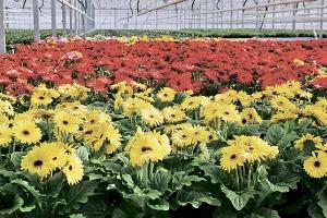 Как наладить цветочный бизнес в теплице?