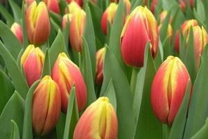 Выращивание цветов на продажу