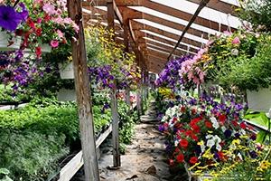 Цветочный бизнес как источник дохода